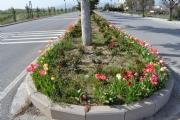 Sarayönü'nde Park ve Bahçeler Güzelleşiyor.